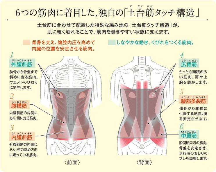 土台筋タッチ腹巻②